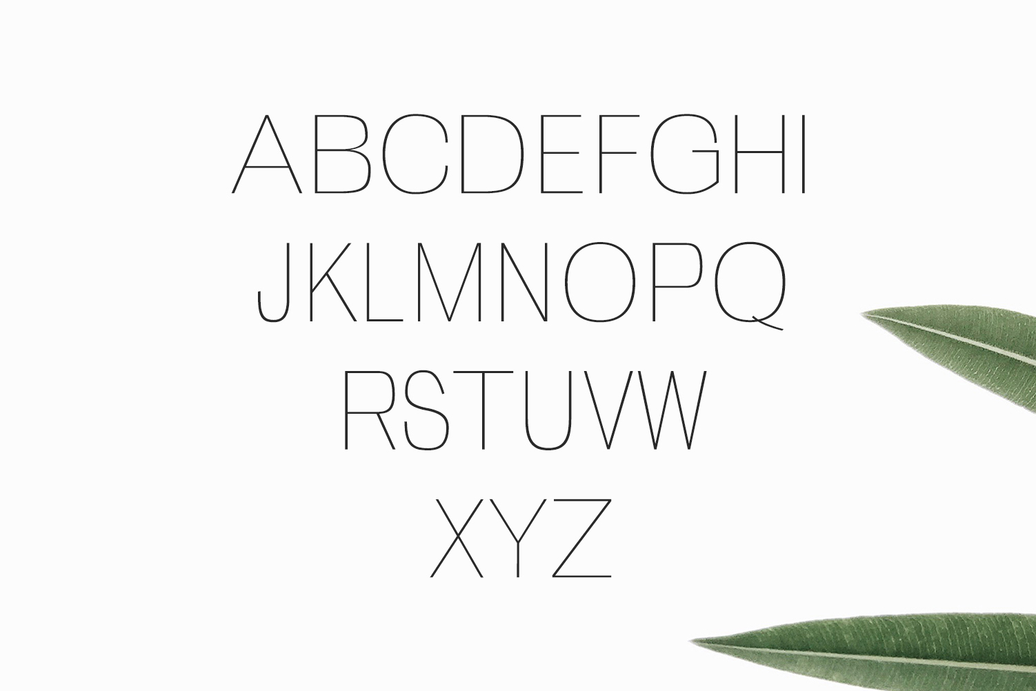 Zevida 4 Sans Serif Font Family example image 2