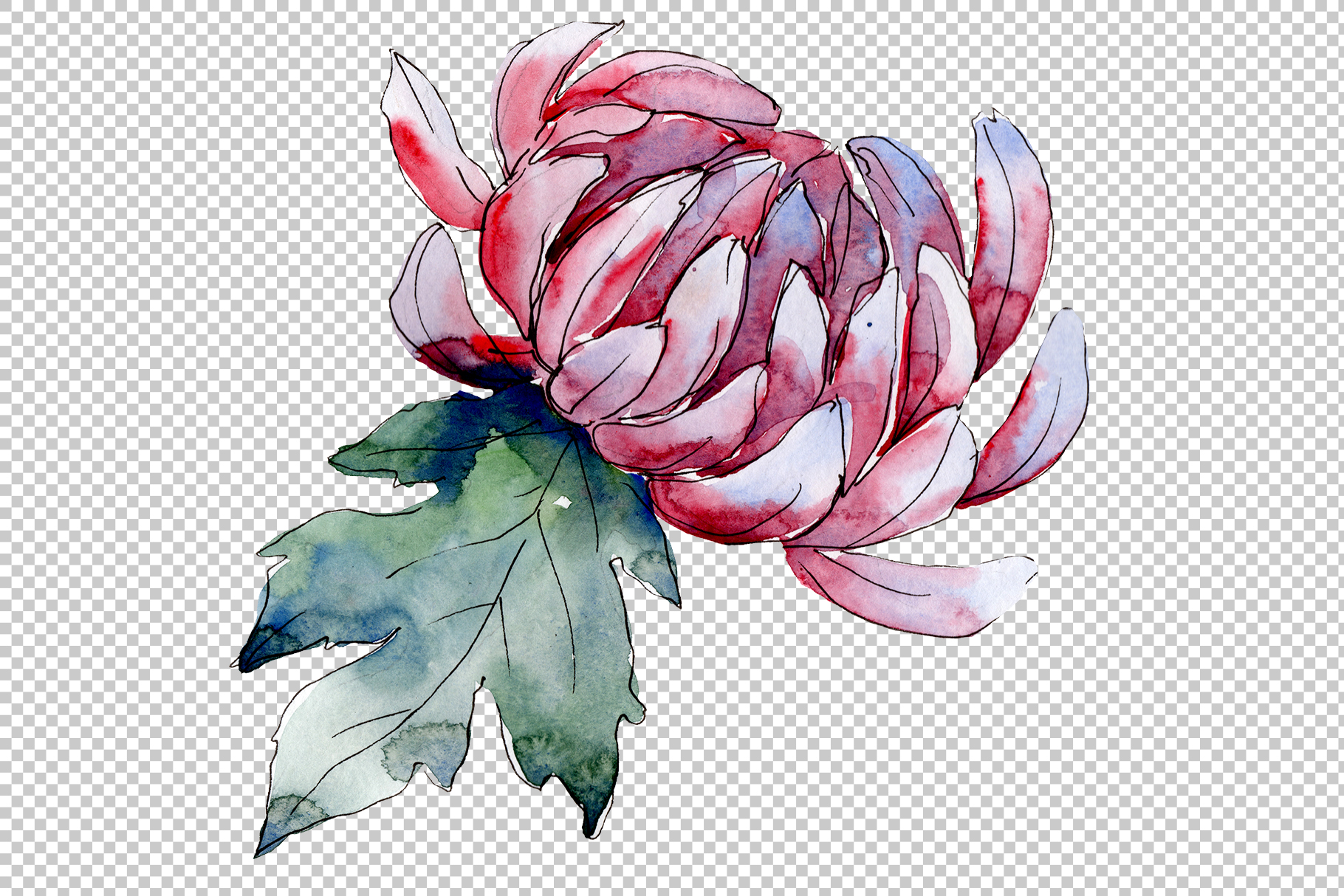 Delicate flower daisy watercolor png example image 5