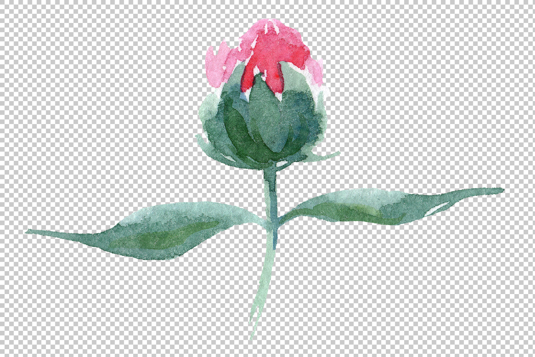 Delicate colorful peony PNG watercolor set example image 11