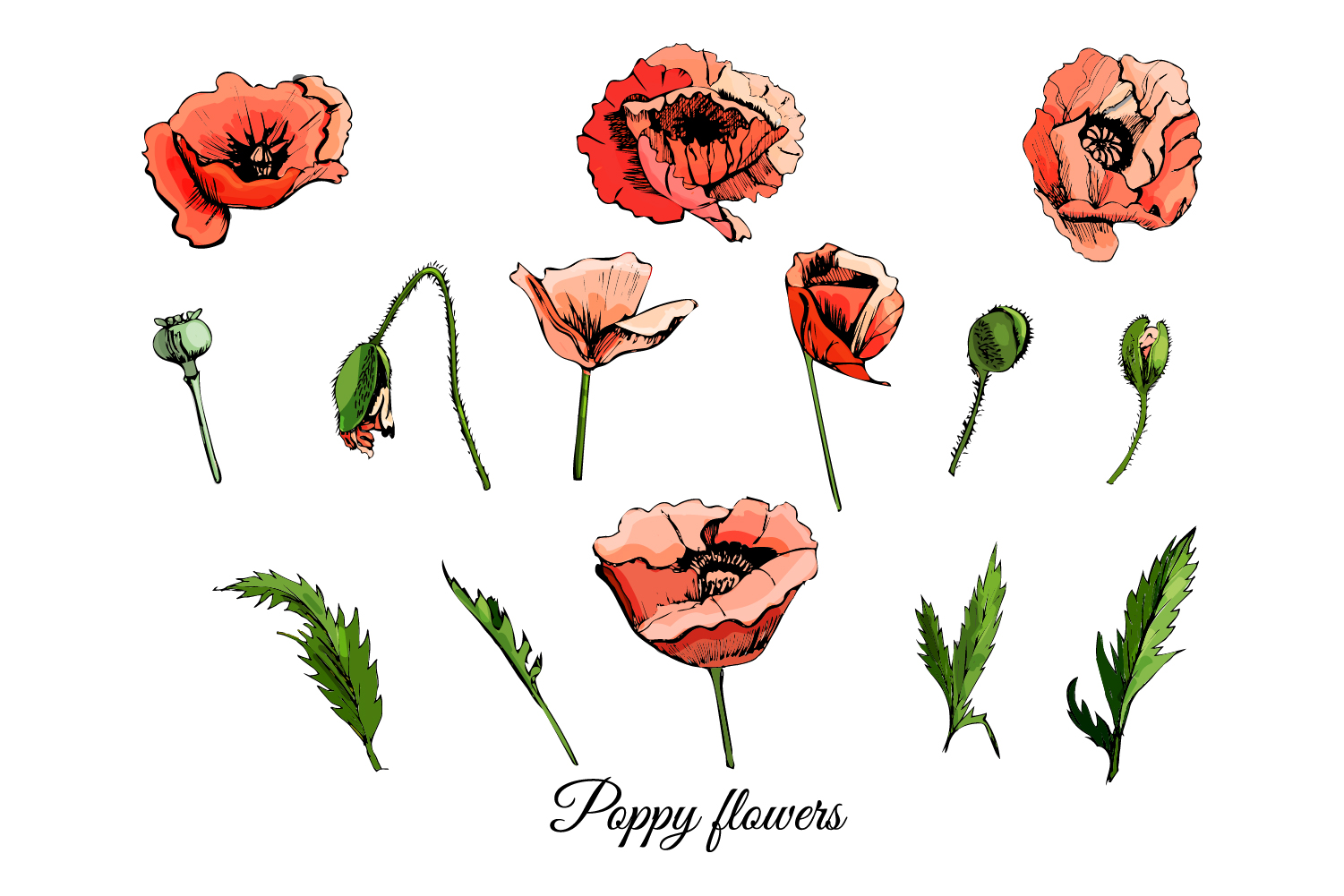 Bundle with sketches of poppy flowers. Modern and retro style.  example image 4