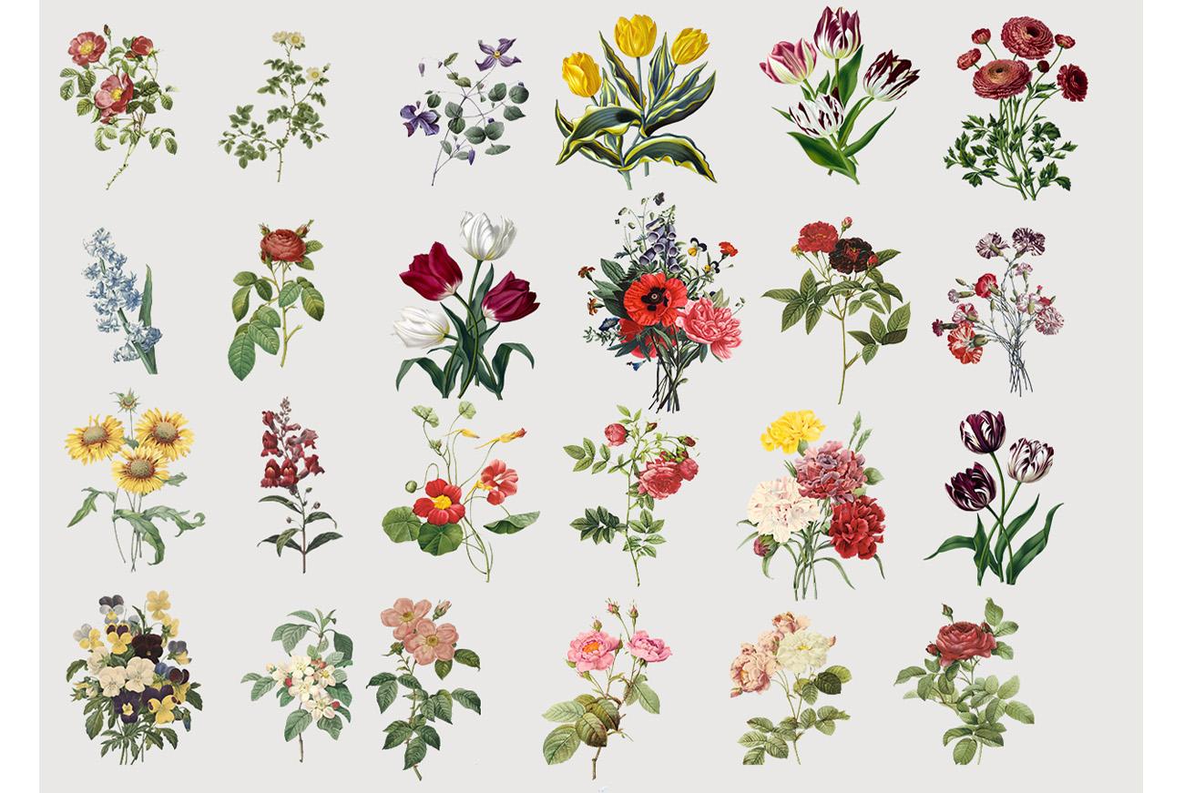 Botanicum - V.2|Elements Botanic example image 5