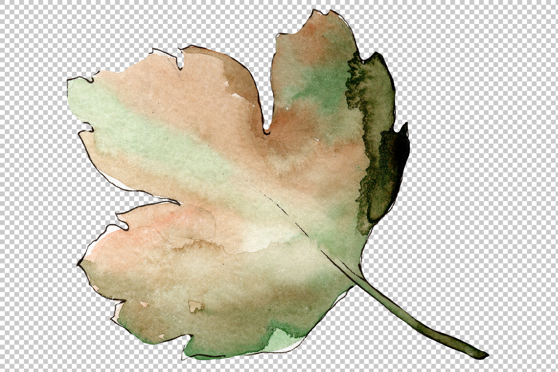Gooseberry PNG watercolor plant set example image 3