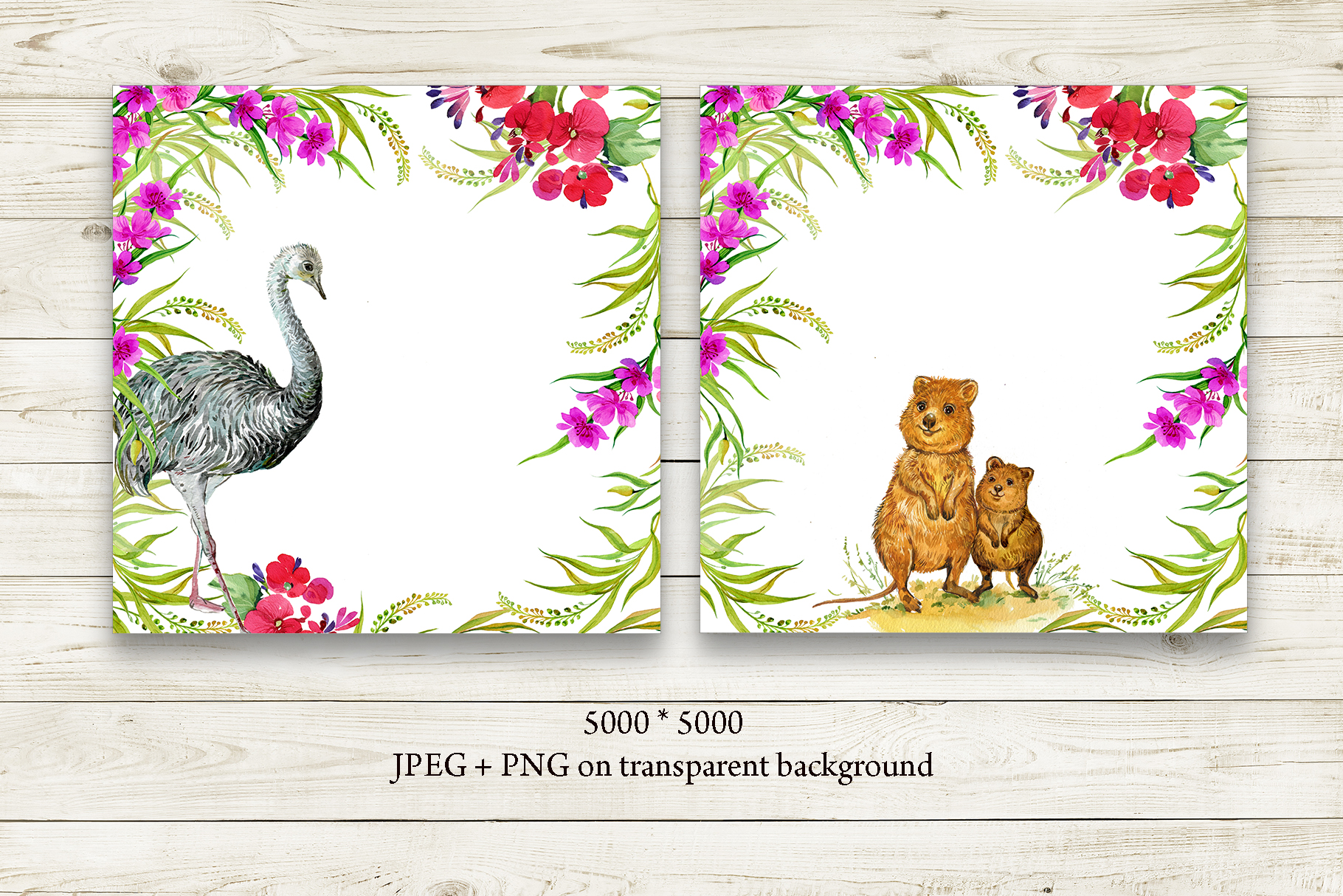 Animals Australia Watercolor example image 8