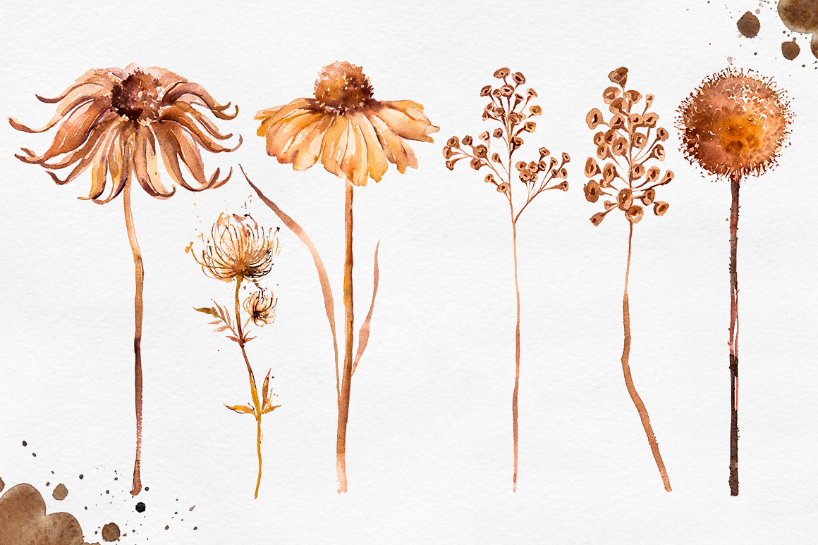 Herbarium Master Collection example image 3