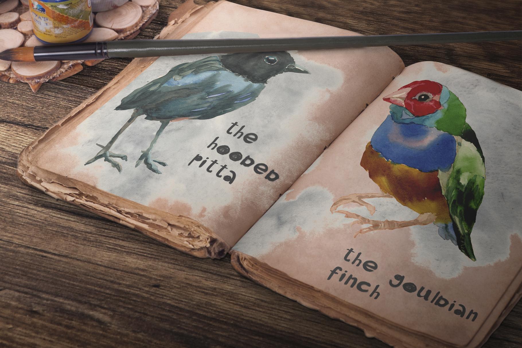 Beautiful birds example image 3