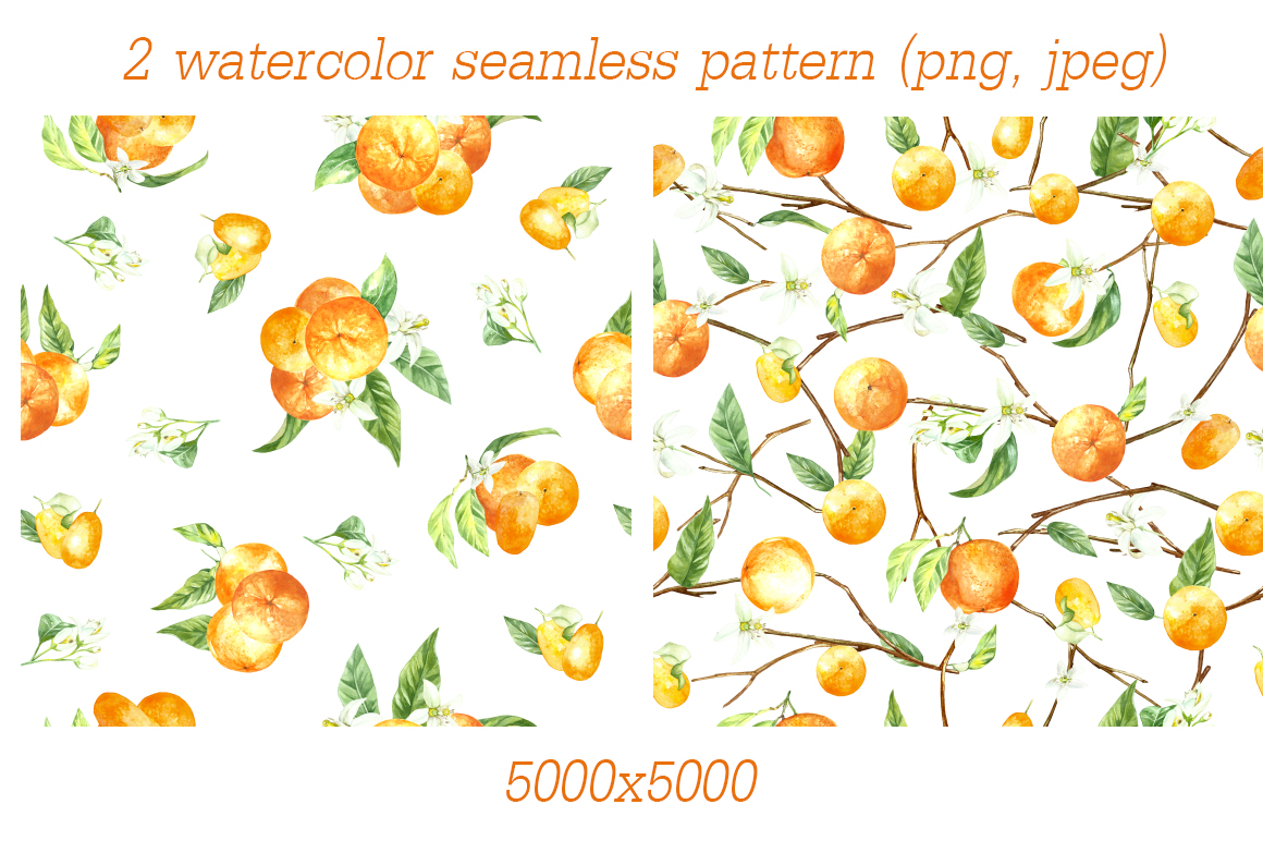 watercolor orange fruit illustration example image 4