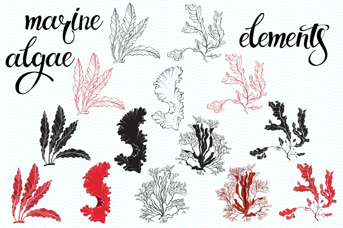 Underwater plants. Graphic set. example image 5