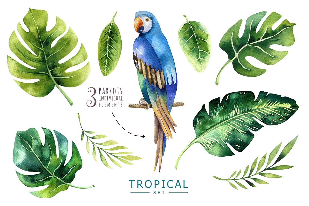 Tropical set I example image 8