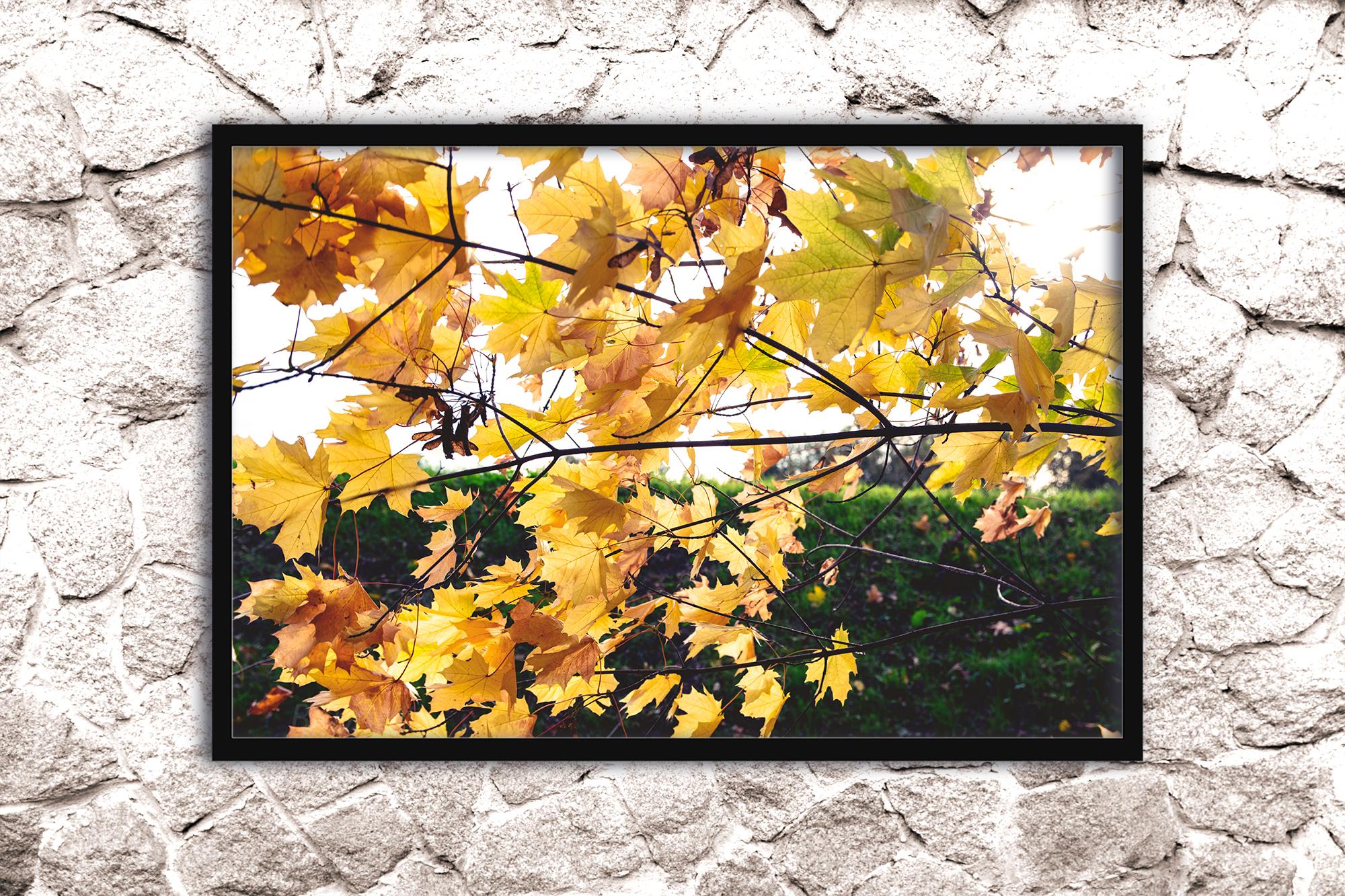 Nature photo, floral print, autumn print, floral example image 3