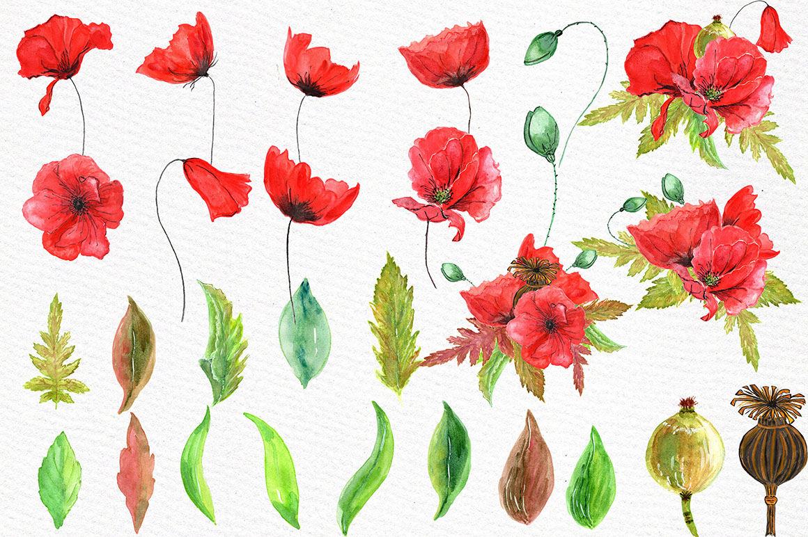 Watercolor flowers- Poppies clipart example image 2