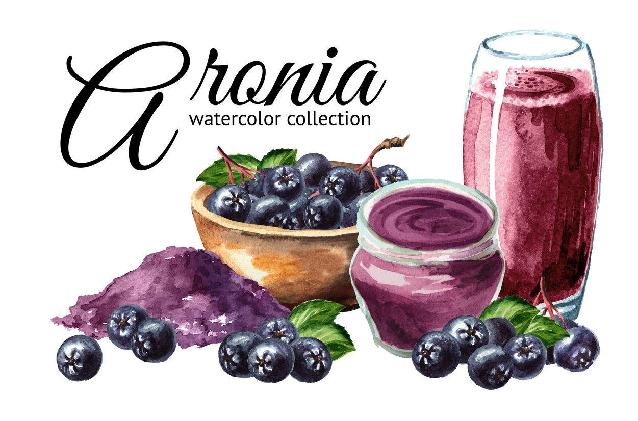 Aronia. Watercolor collection example image 1