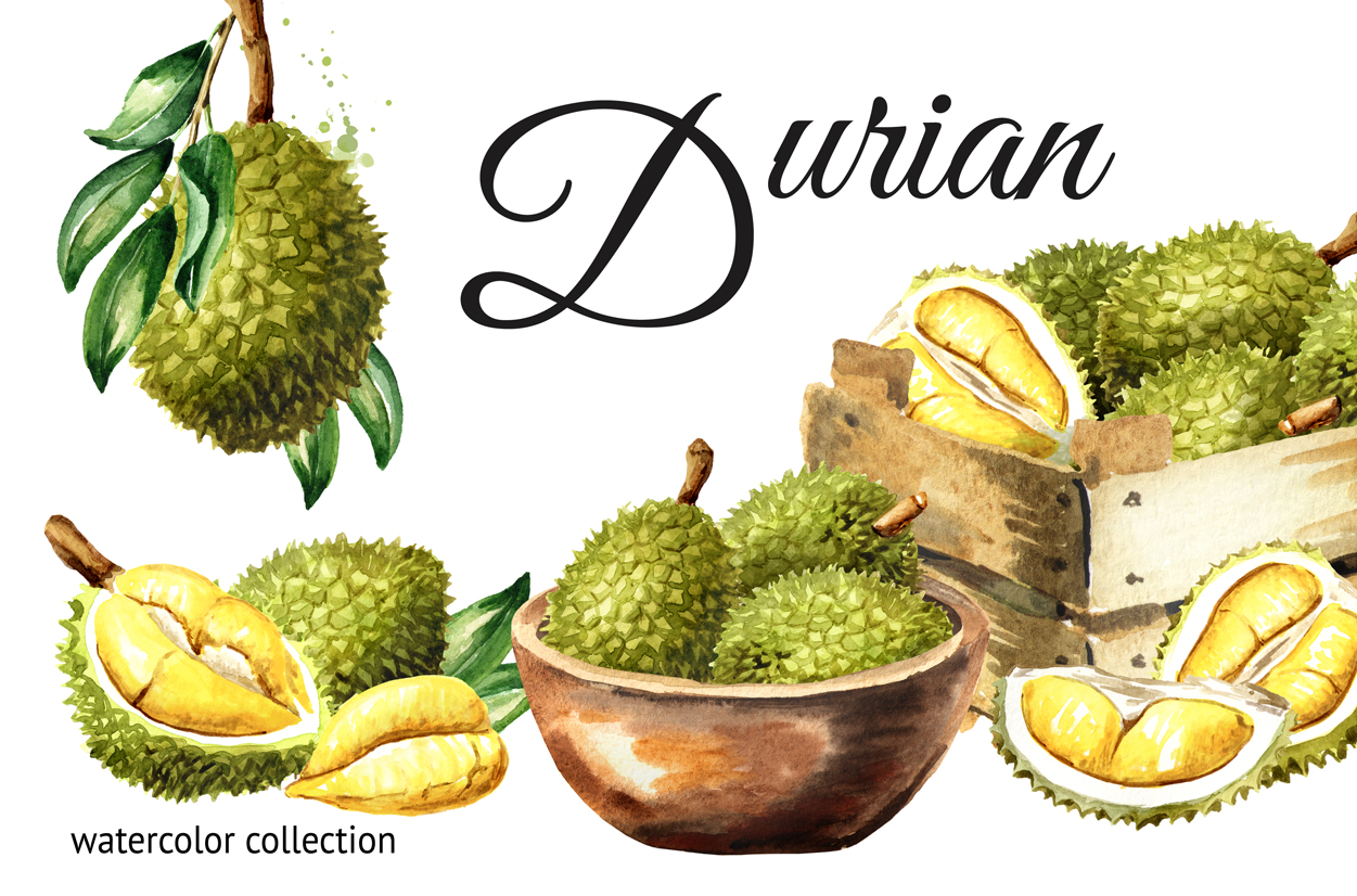 Durian. Watercolor collection example image 1