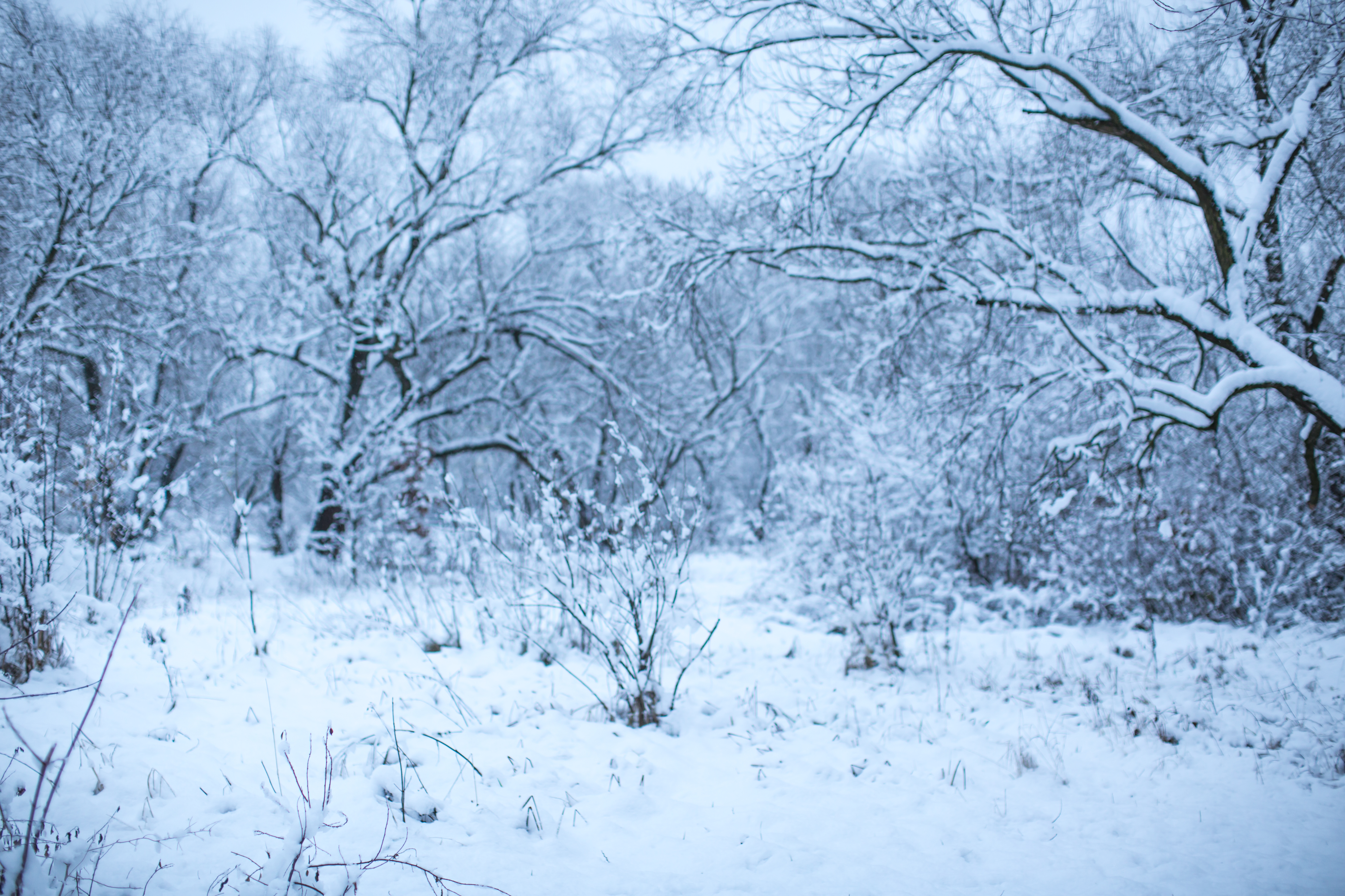 Blurred snow forest example image 1