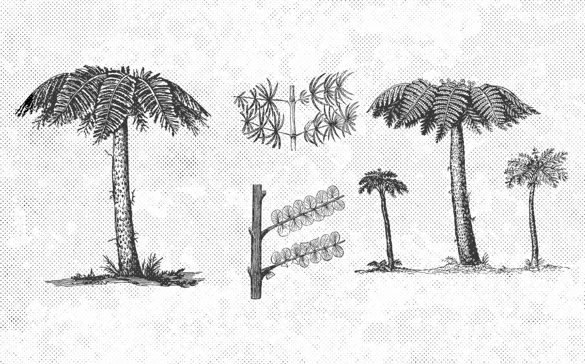 Paleontology Vintage Vector Illustrations 150 Items example image 4