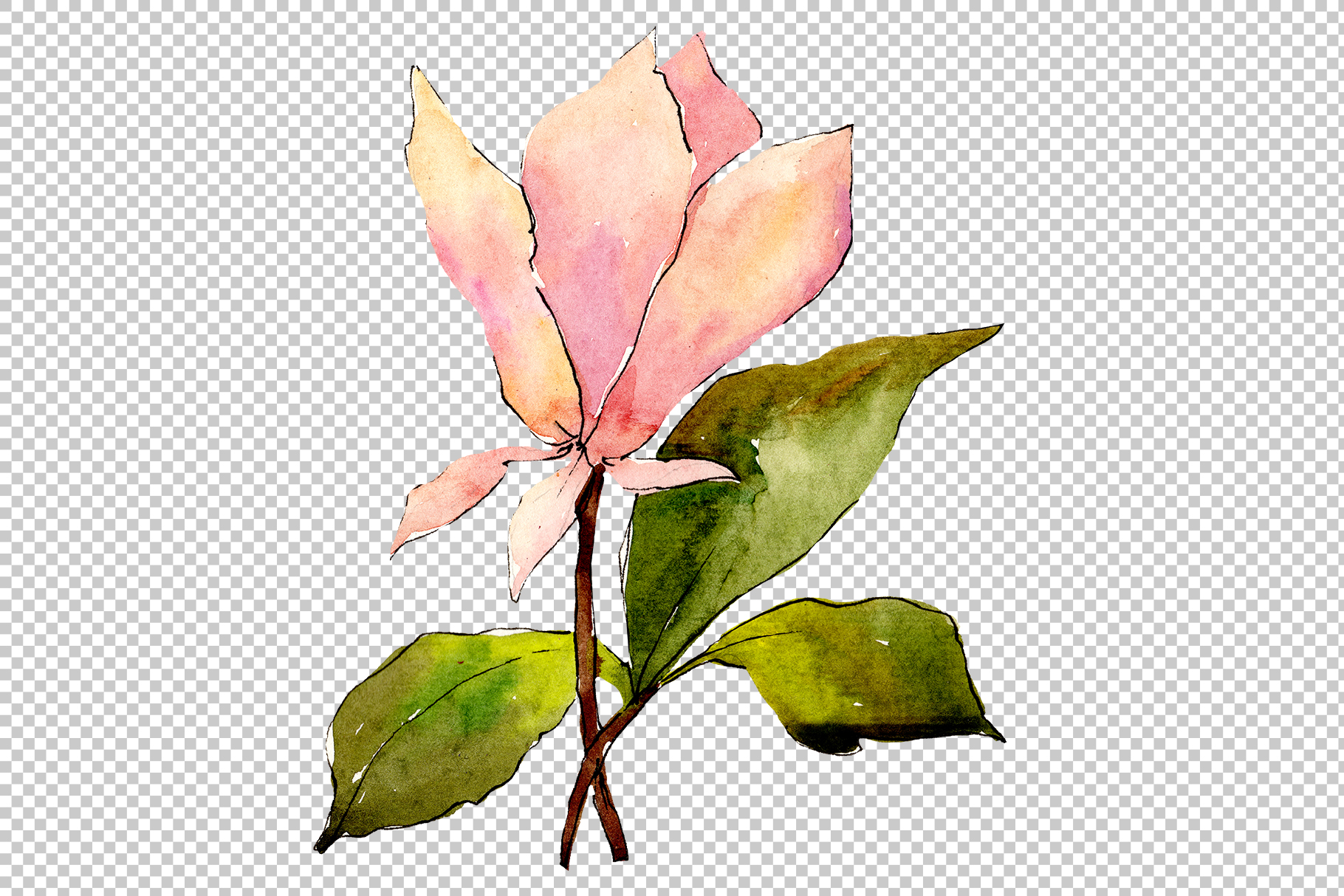 Tender pink magnolia PNG watercolor set example image 2