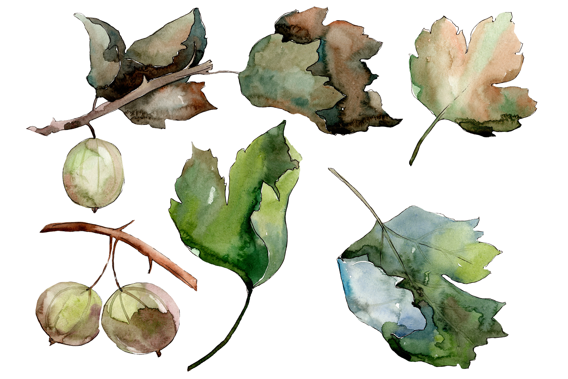 Gooseberry PNG watercolor plant set example image 1