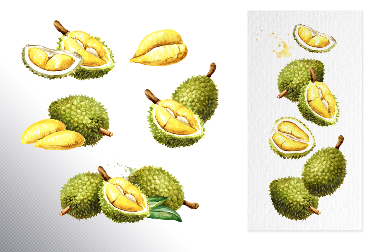Durian. Watercolor collection example image 2