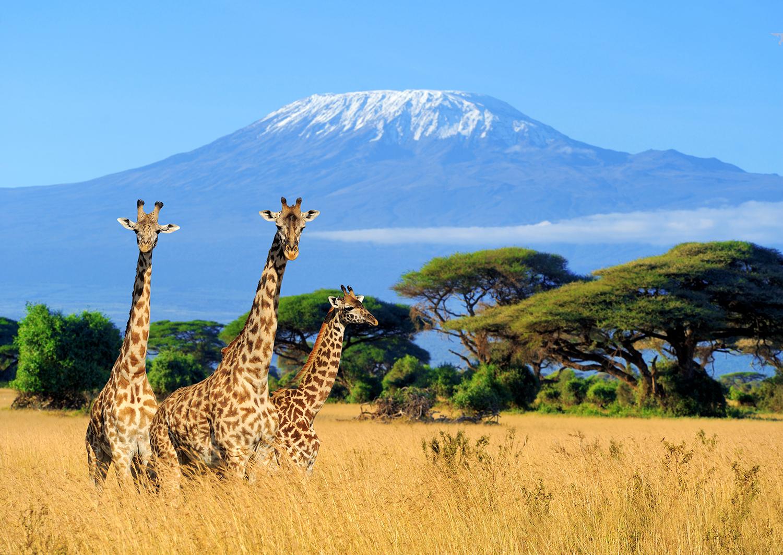 Giraffe example image 2