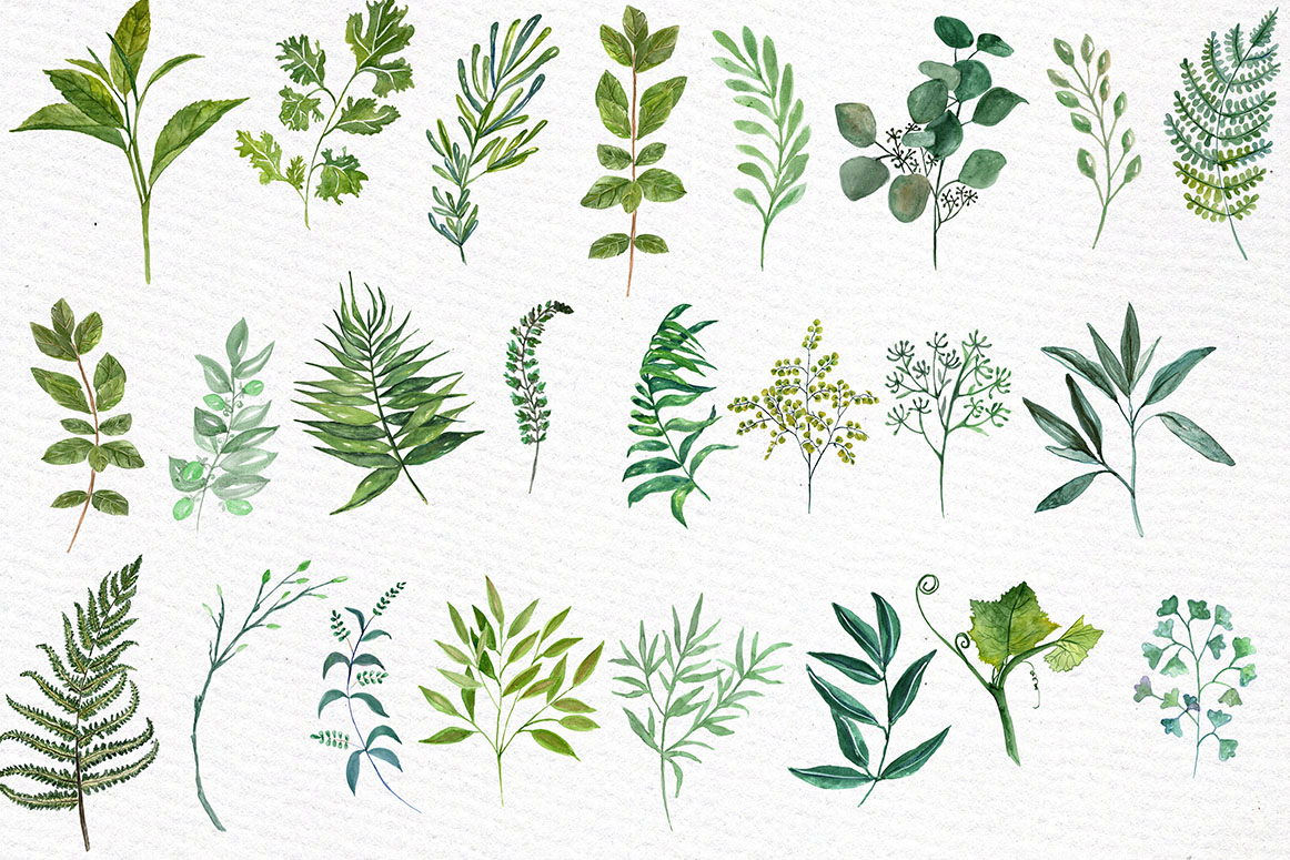 Watercolor Ferns Clipart example image 3