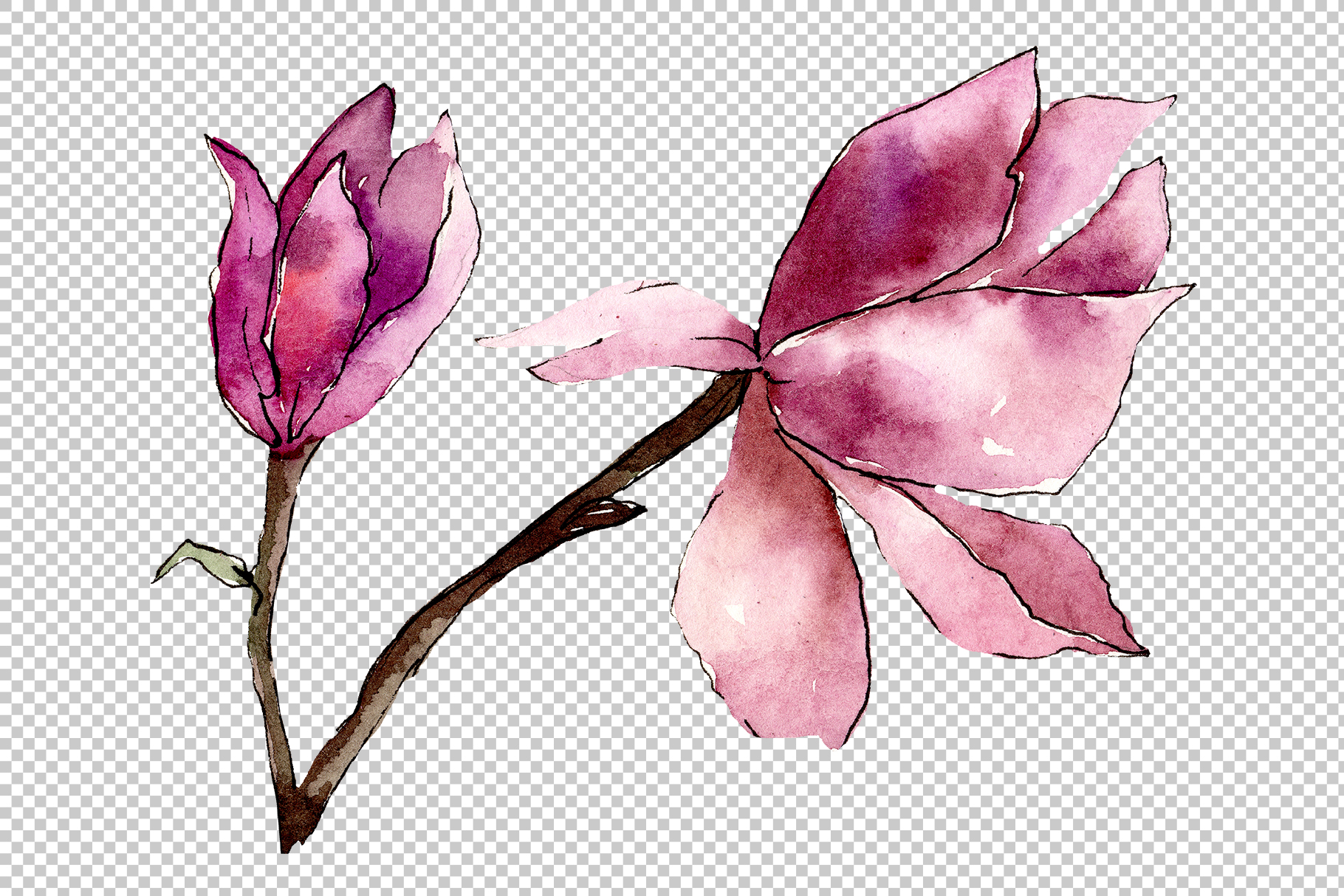 Tender pink magnolia PNG watercolor set example image 4