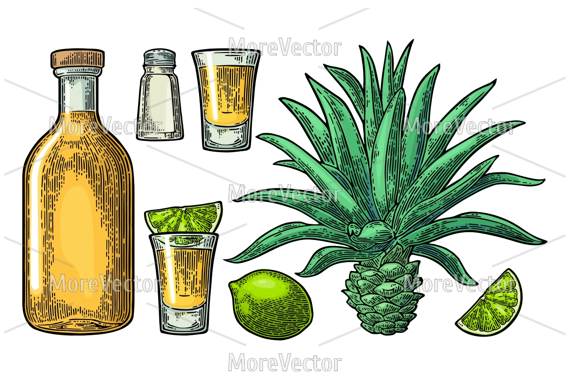 Illustration, pattern and posters Tequila with engraving.  example image 10