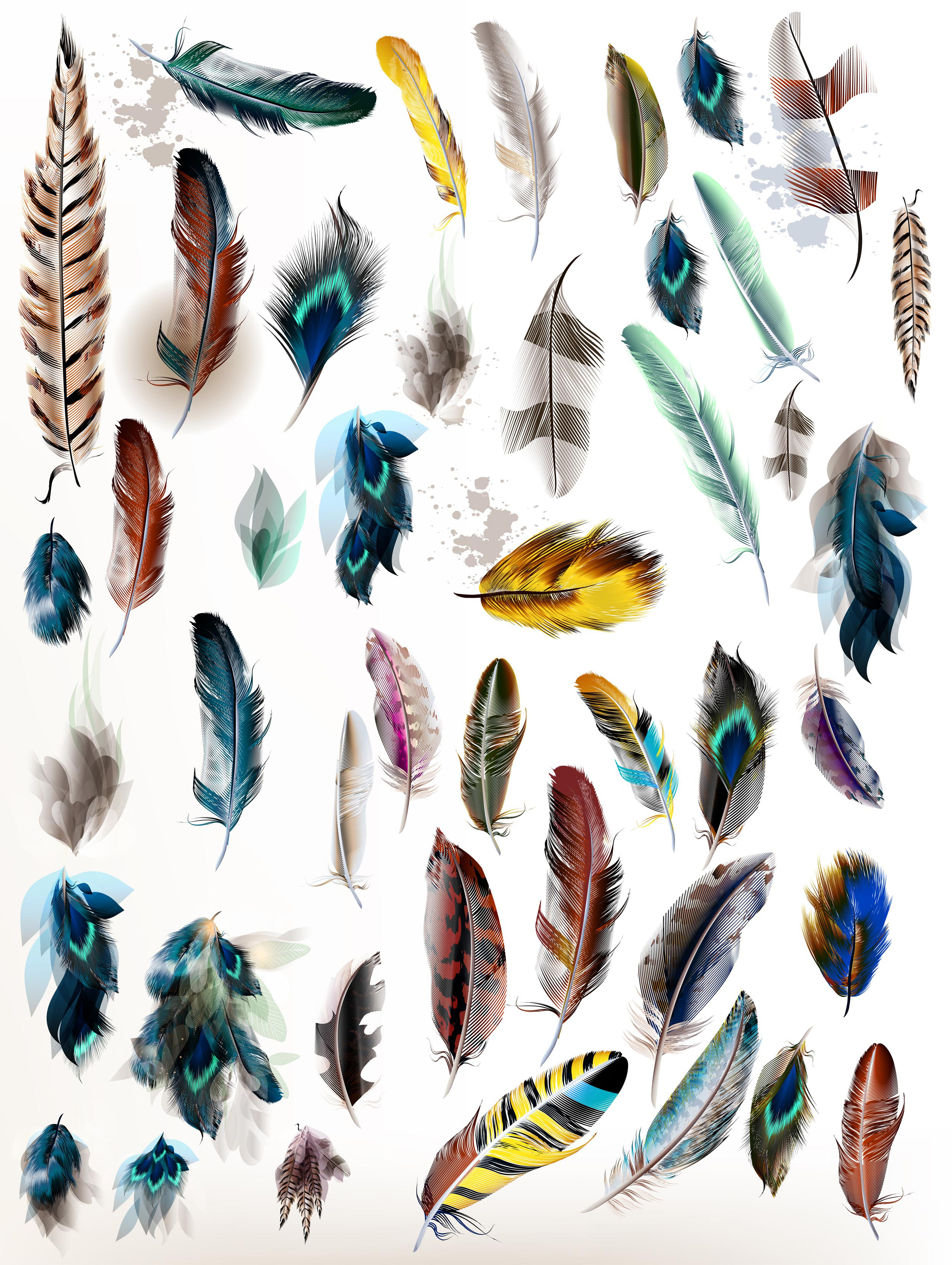 Colorful feather bundle. Vector illustrations and elements example image 14