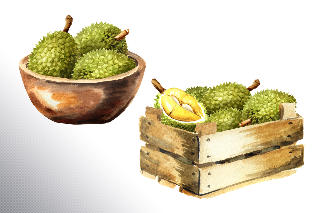 Durian. Watercolor collection example image 7