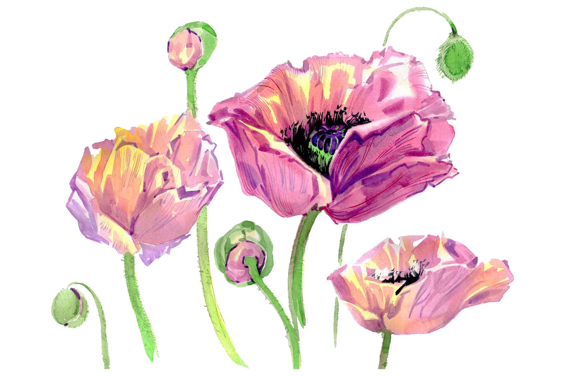 Original poppy Watercolor png example image 1