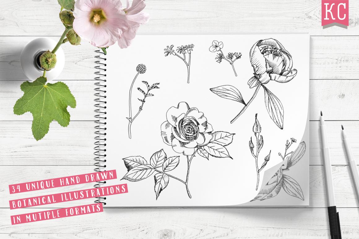 Vector Botanical Bundle Illustrations example image 2