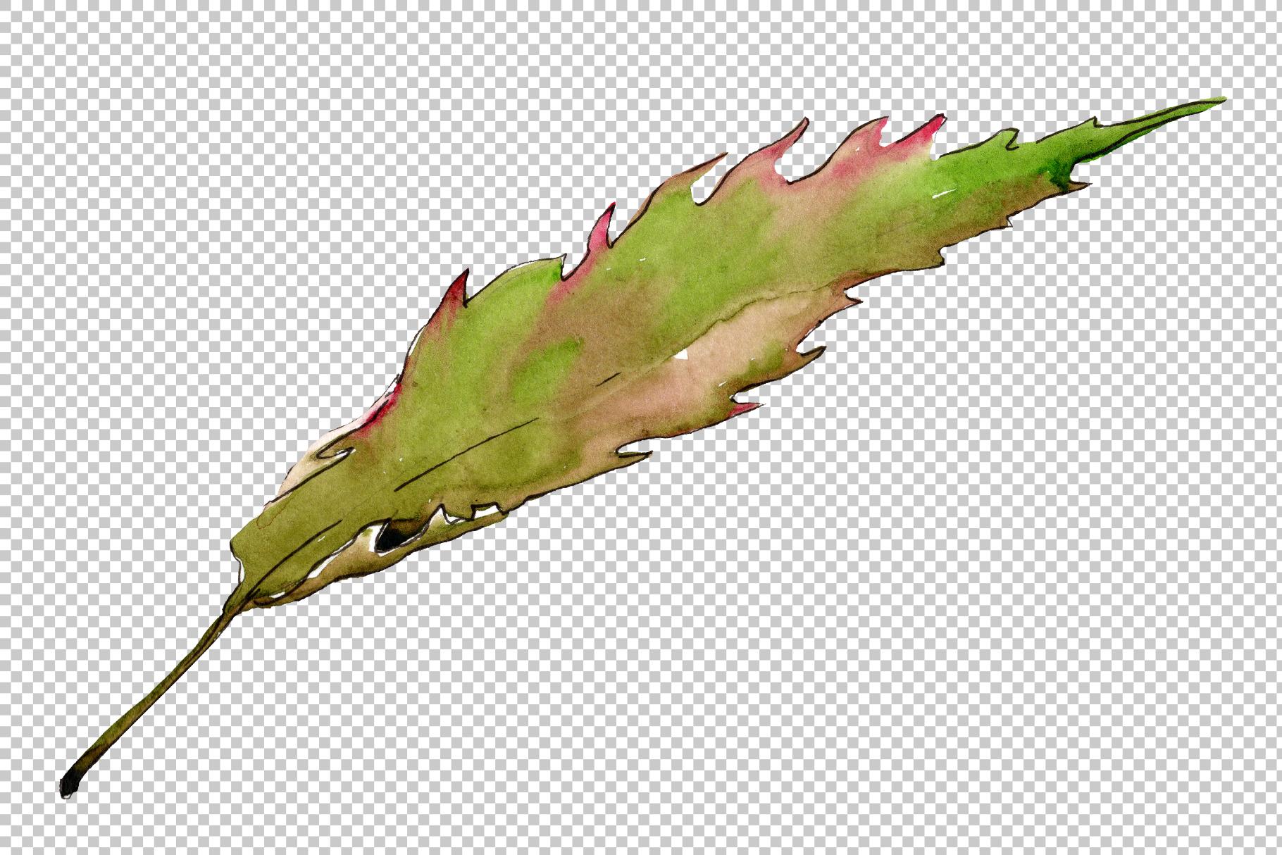 Autumn chestnut PNG watercolor plant set example image 4