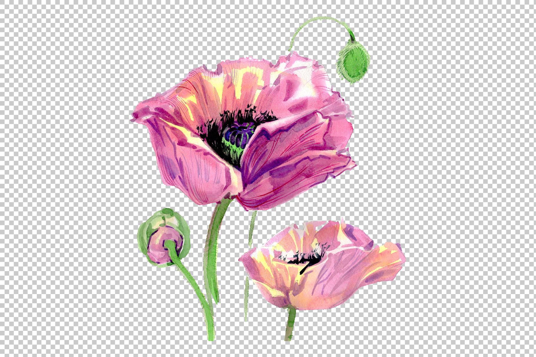 Original poppy Watercolor png example image 4