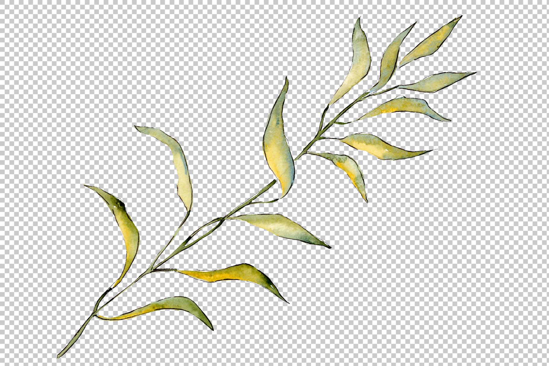 Willow branches PNG watercolor set example image 3