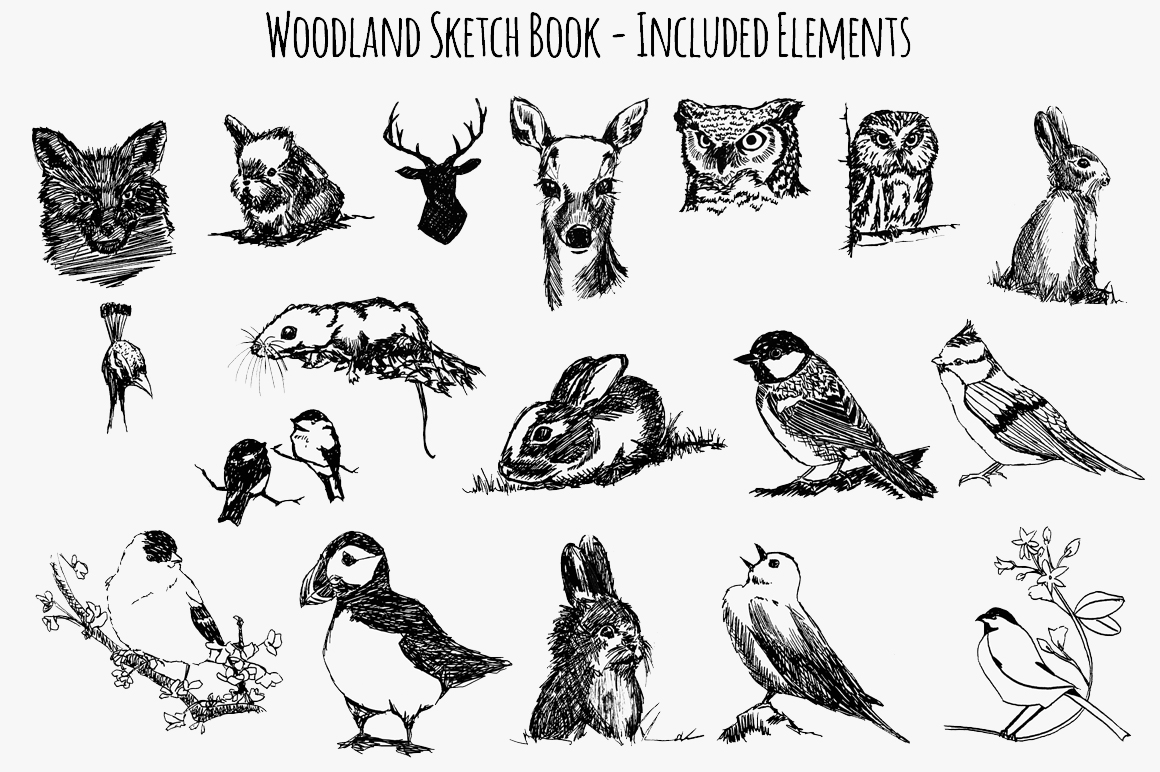 Woodland Animal Sketch Vector Bundle example image 2