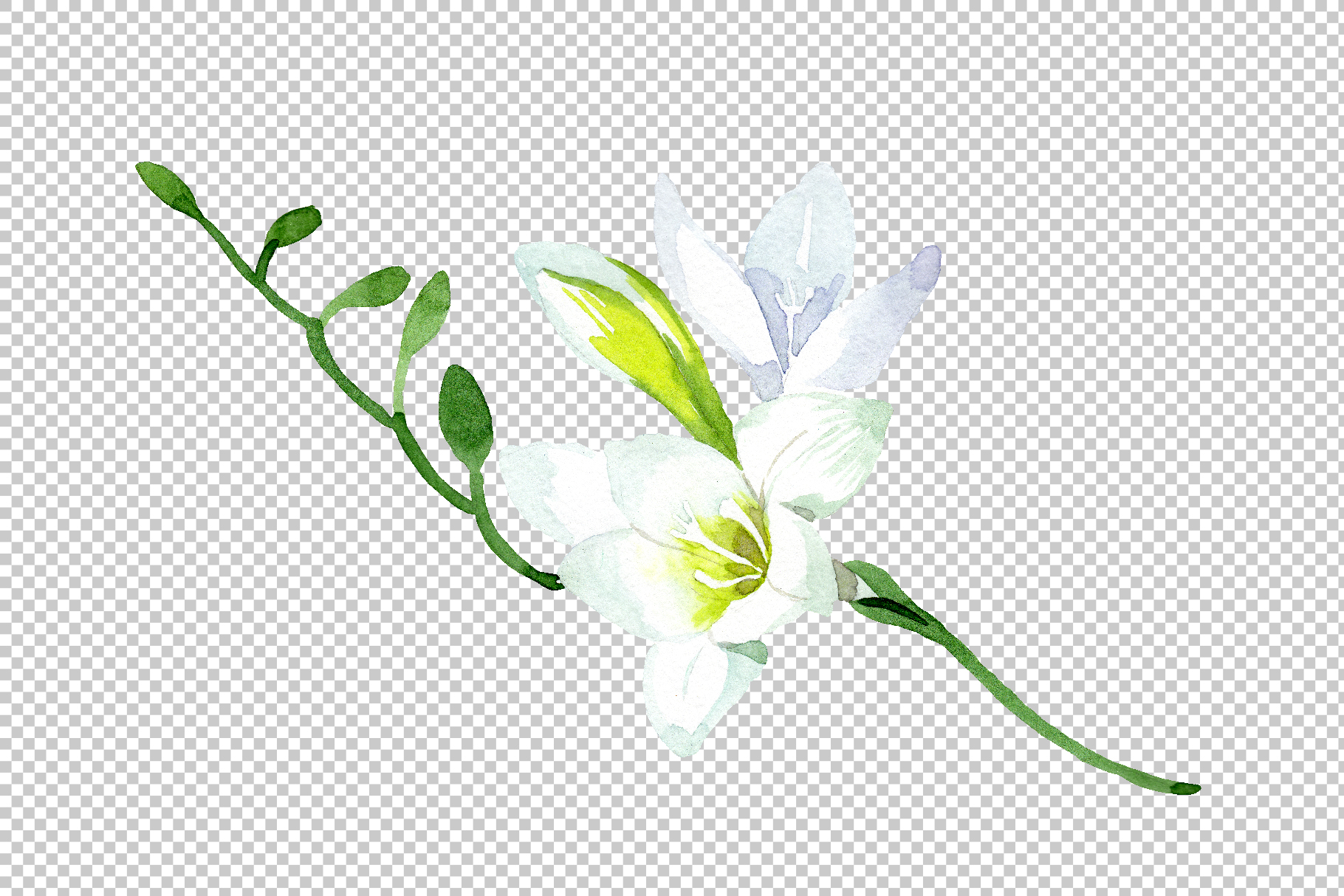 White Freesia Watercolor png example image 8