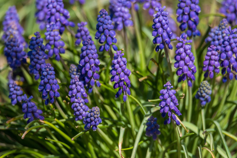 Tiny Purple Flowers 275449 Nature Design Bundles