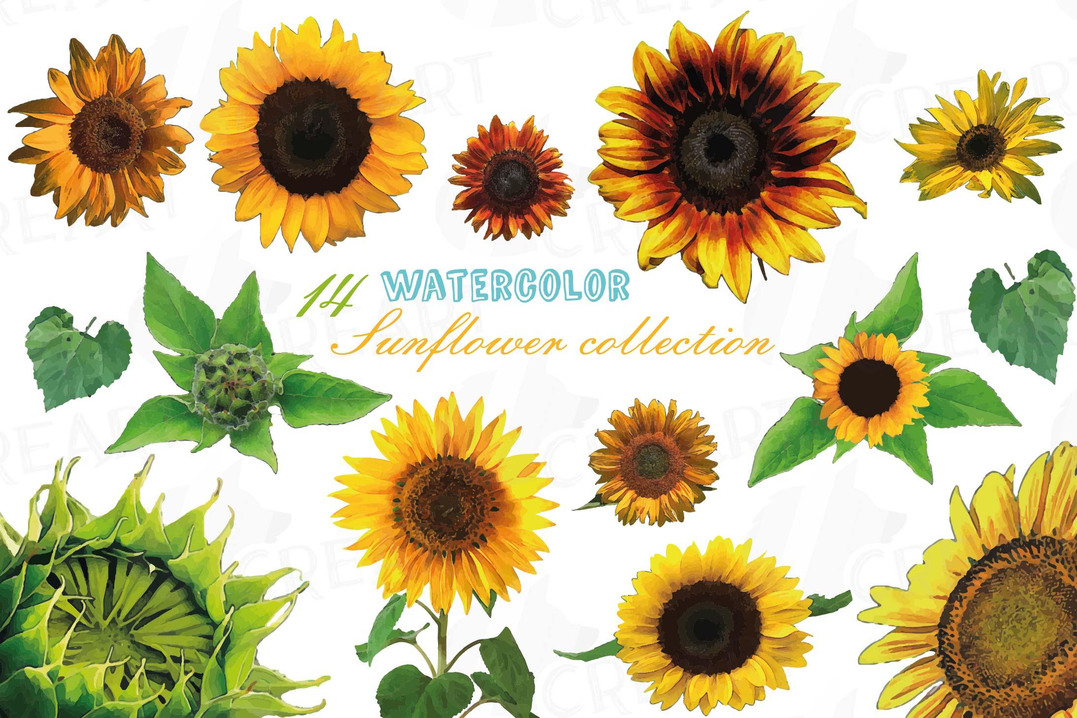 Sunflower watercolor clip art pack, sunflower decoration ...