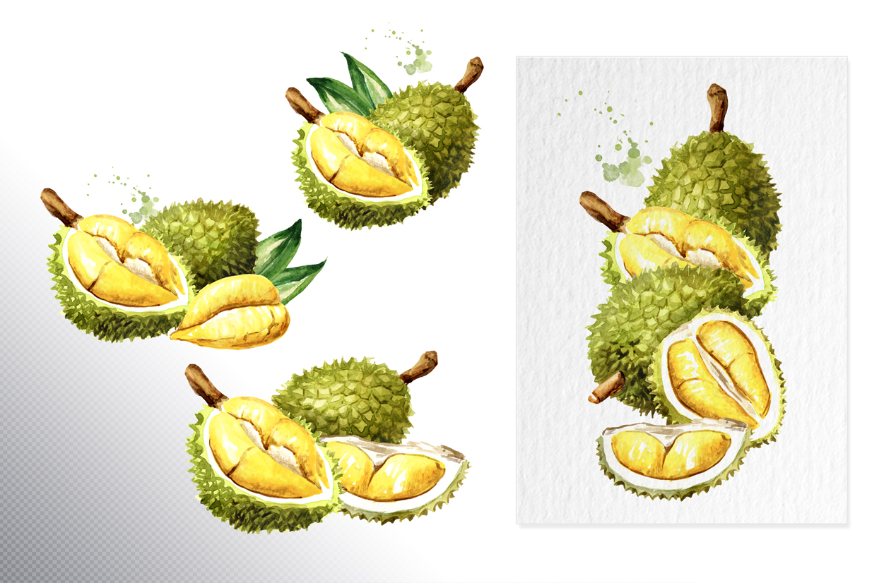 Durian. Watercolor collection example image 3