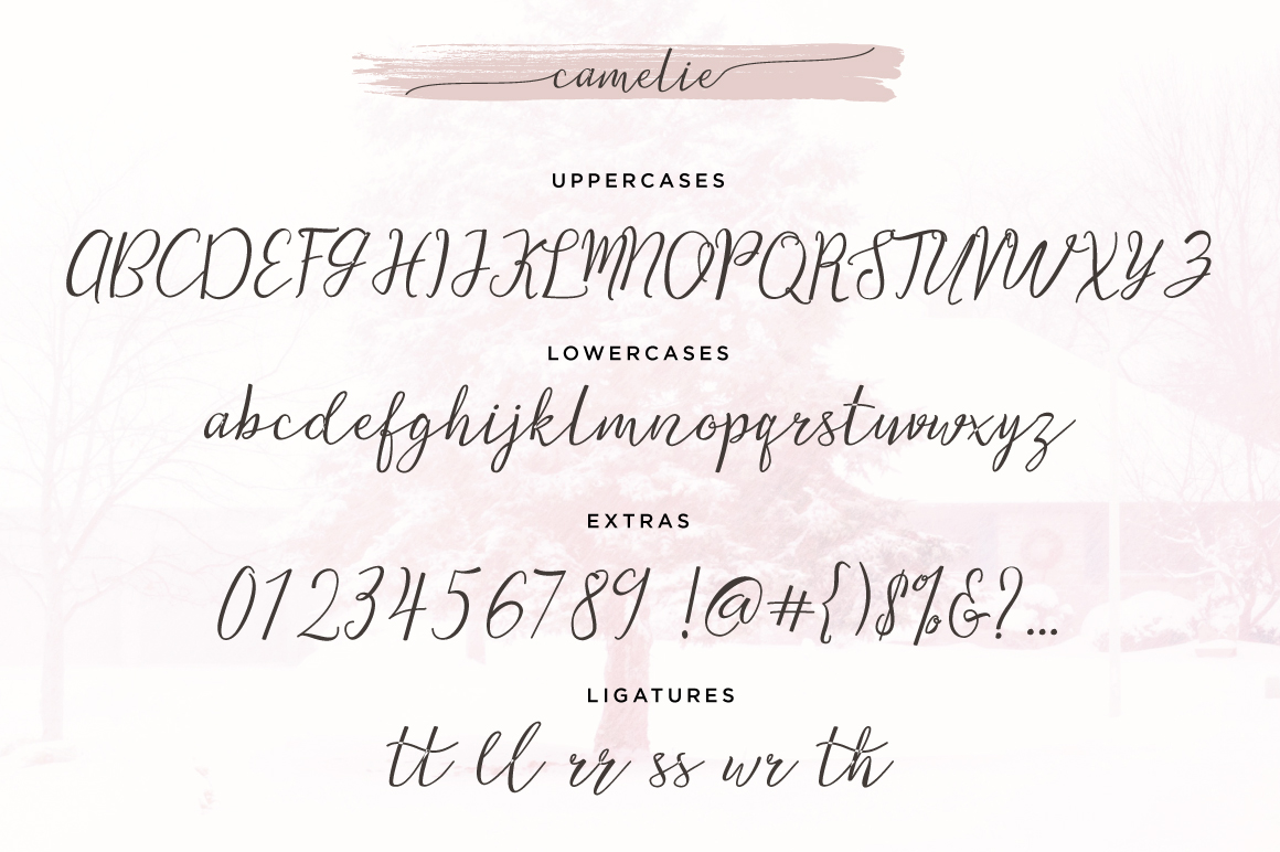 Camelie Typeface example image 5