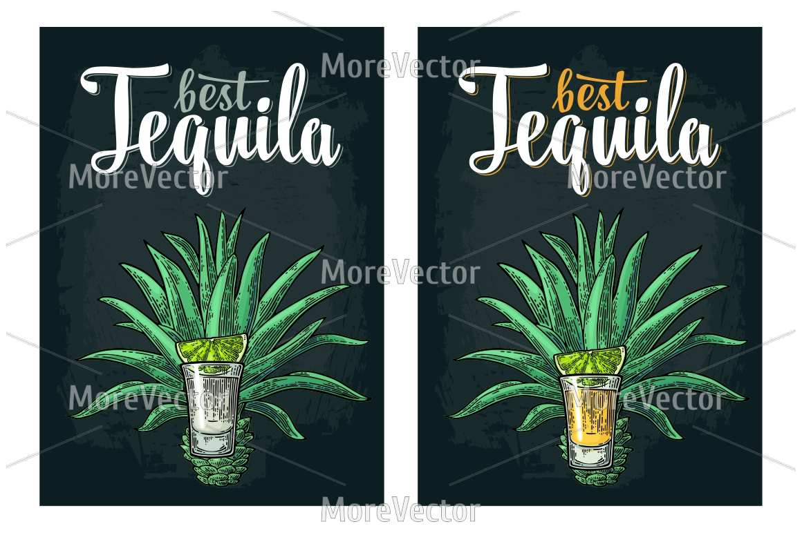 Illustration, pattern and posters Tequila with engraving.  example image 7