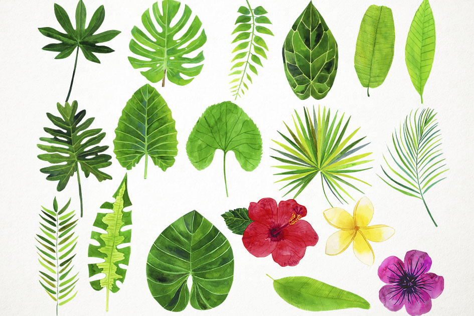 Watercolor Tropical Leaves Clipart, Palm Leaves Clip Art example image 2
