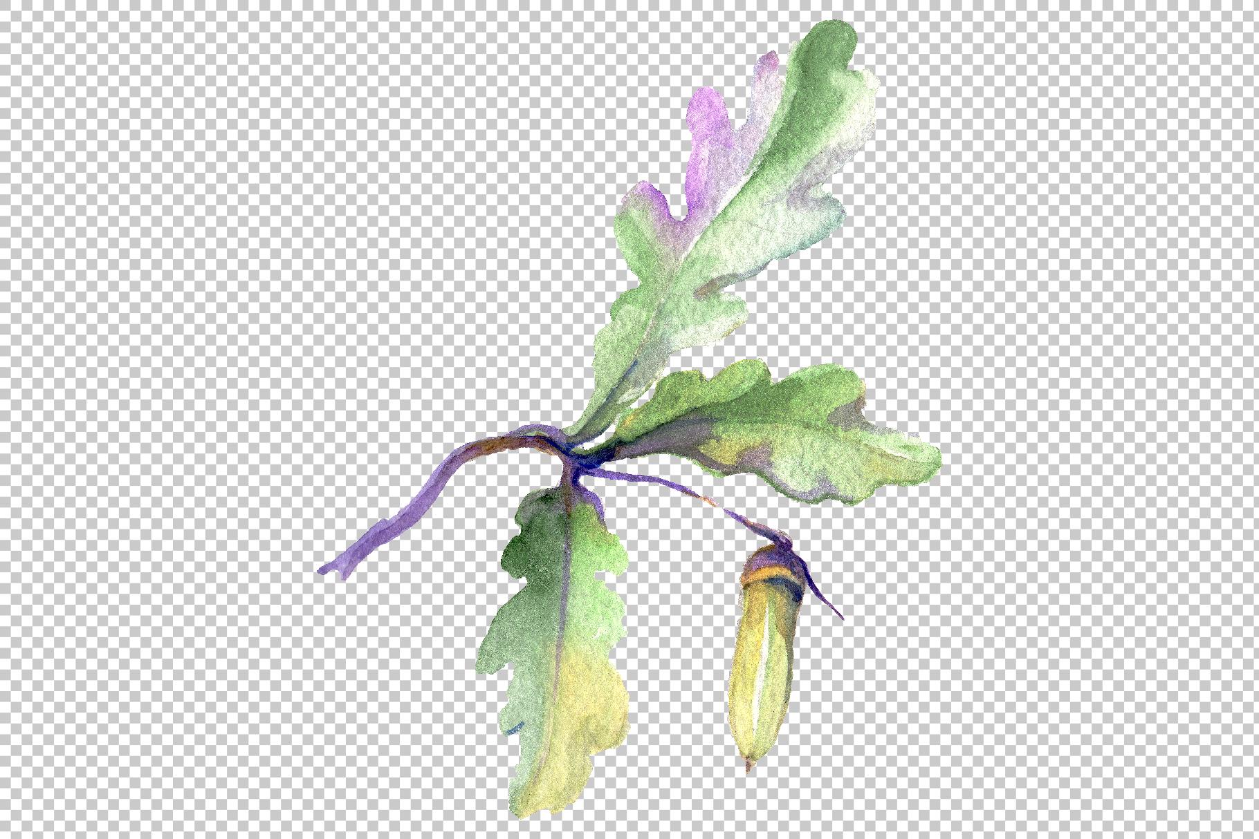 Acorn Watercolor png example image 3