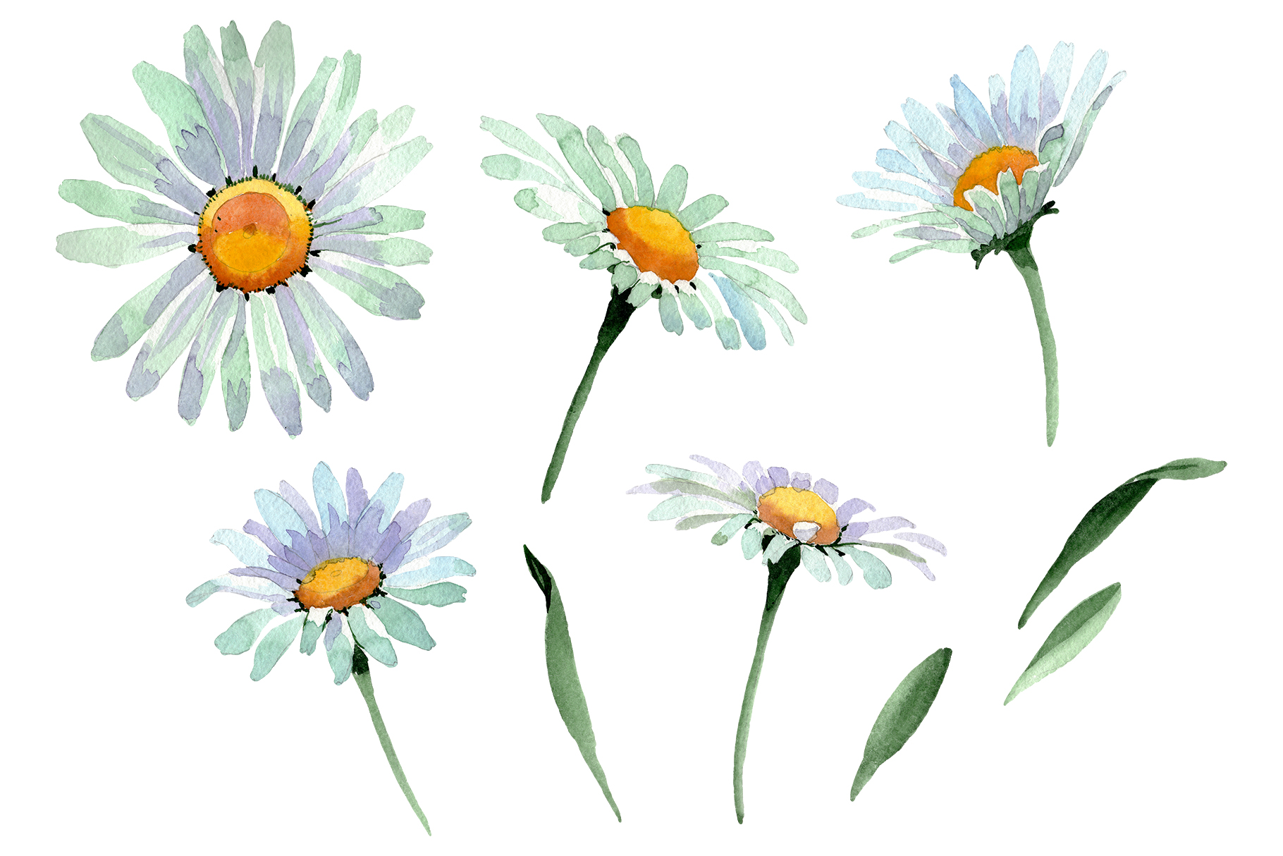Big white chamomile Watercolor png example image 1