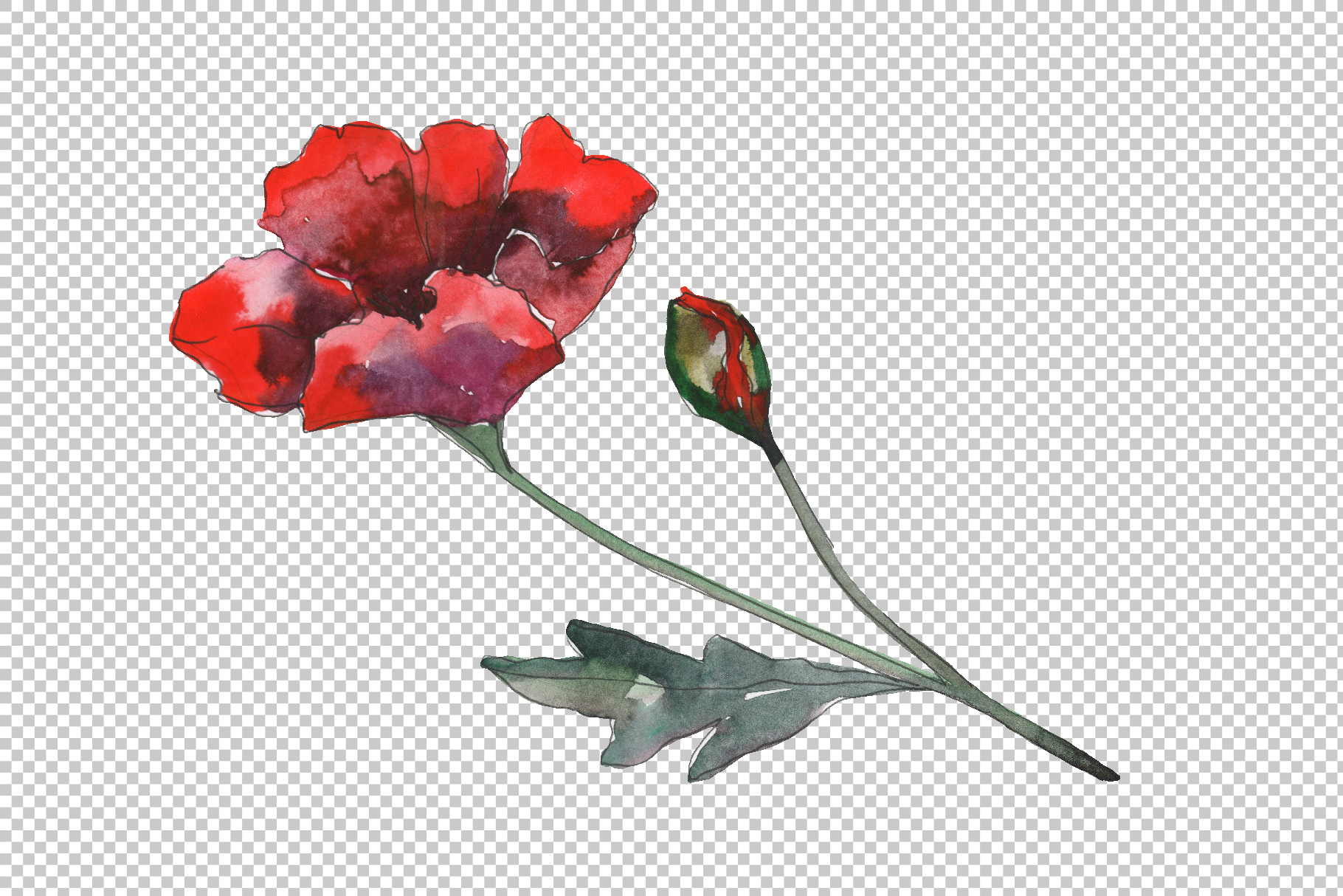 Poppy 1 Watercolor png example image 2