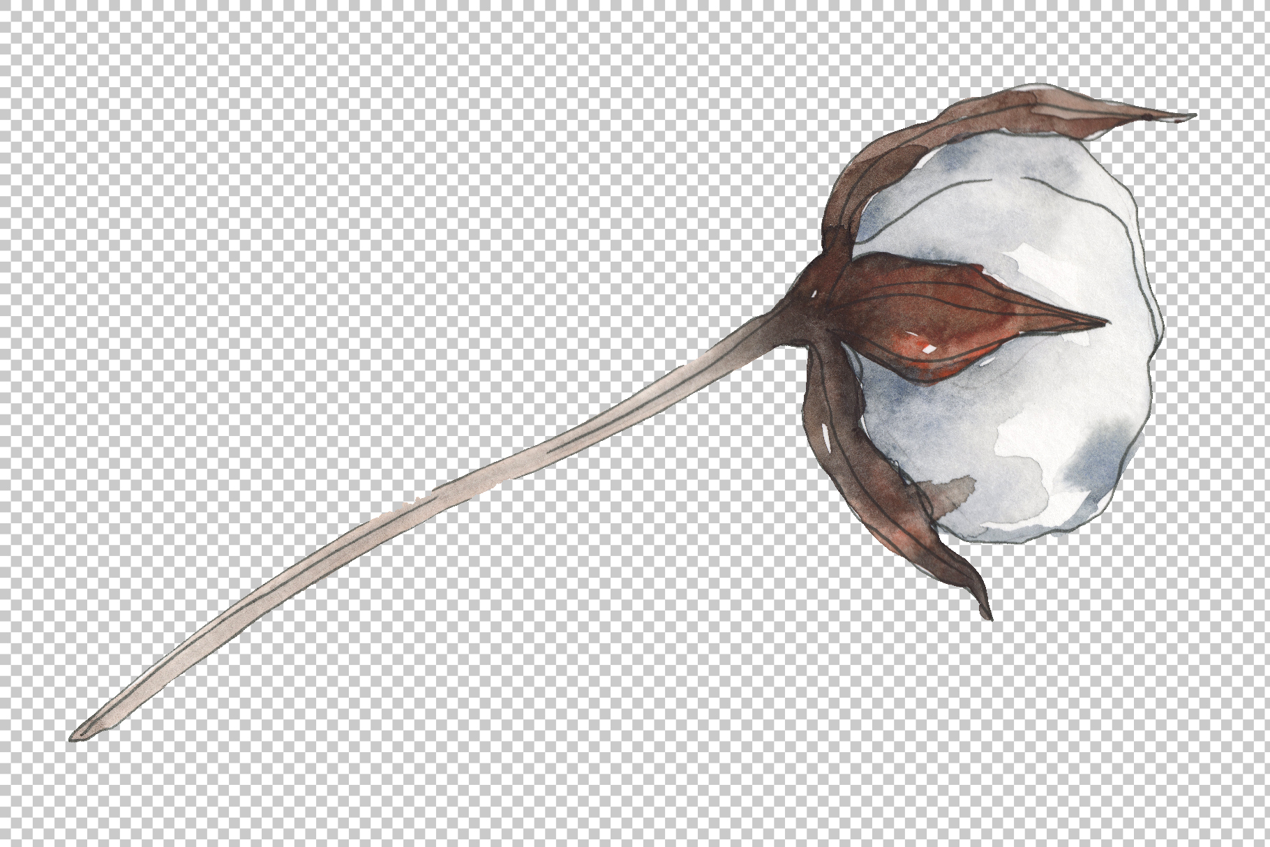 Cotton 2 Watercolor png example image 2