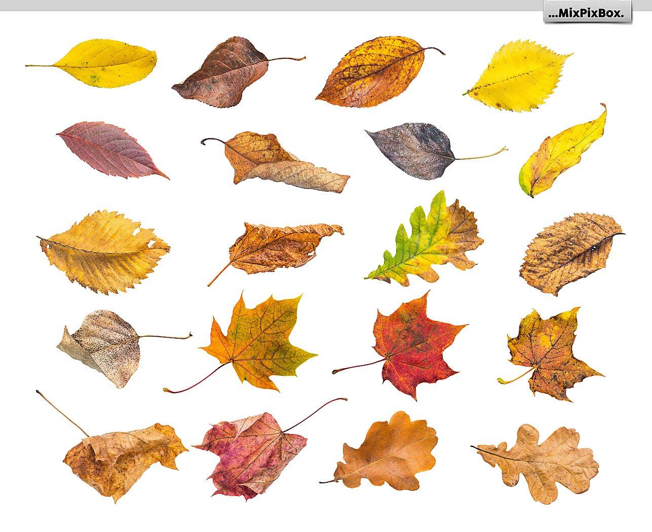 50 Autumn Leaves Overlays example image 5