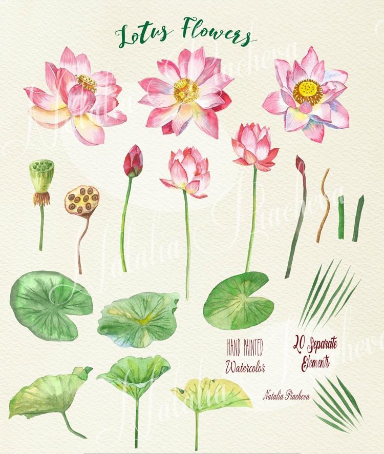 Lotus Flowers example image 3