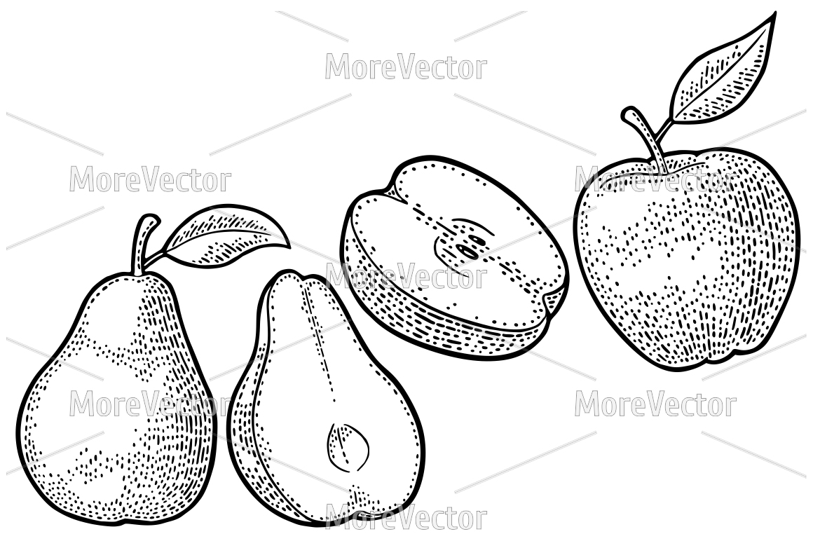 Pear, apple. Vintage black engraving example image 1