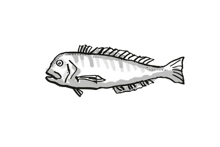 Australian Barred Tilefish Fish Cartoon Retro Drawing example image 1