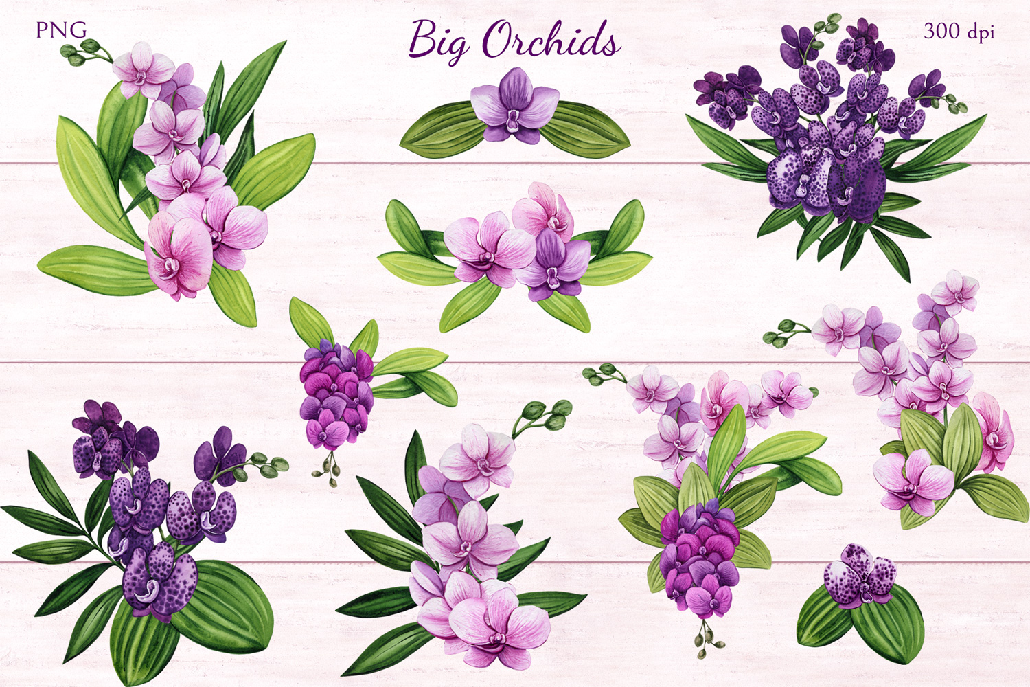 Big Orchids example image 3