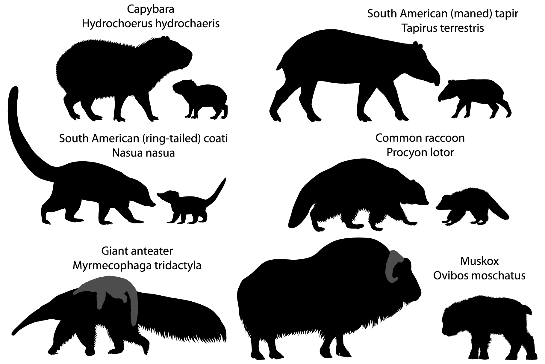 Silhouettes of animals of America with cubs example image 1